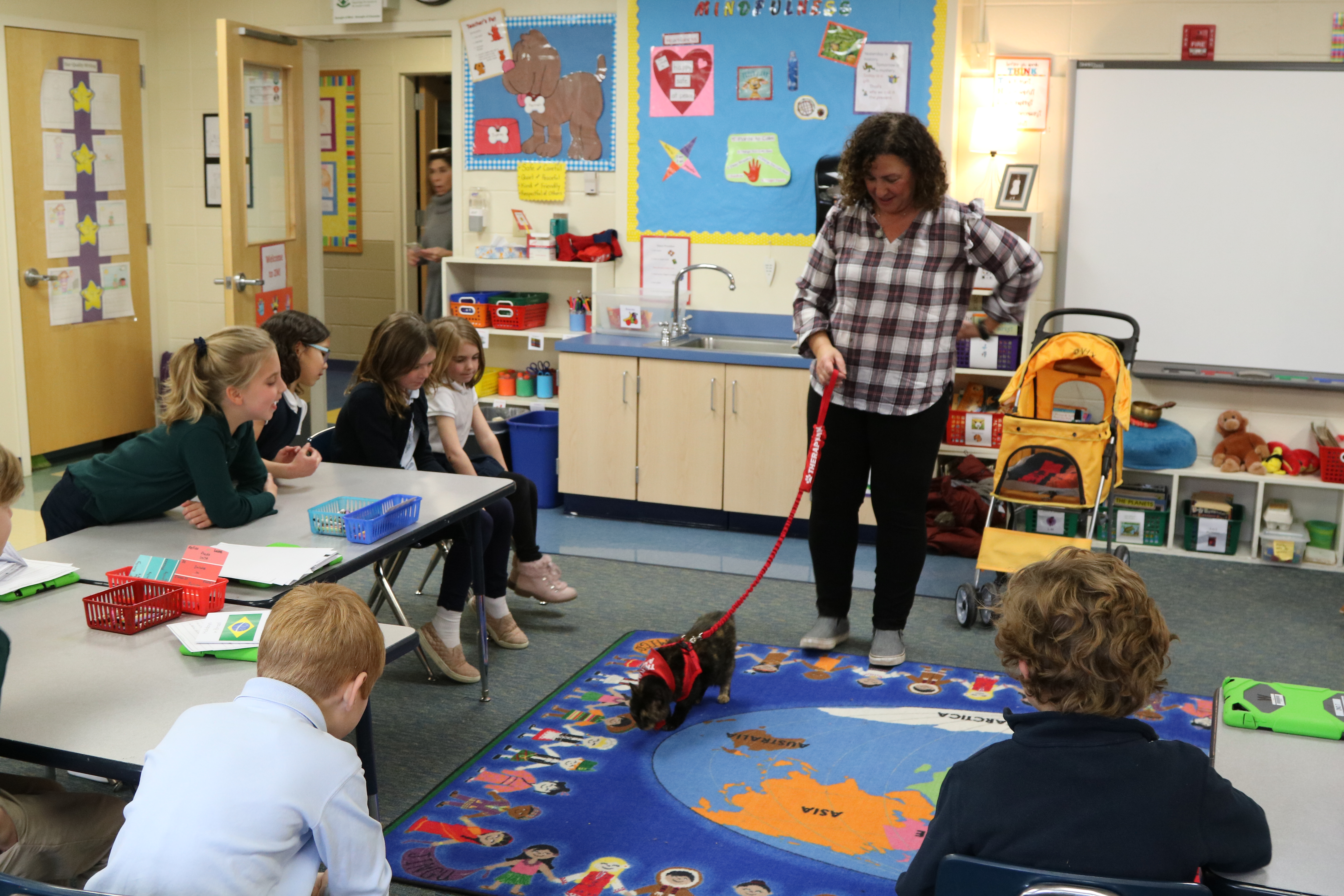 Therapy cat Alice explored our Grade 2 classroom.